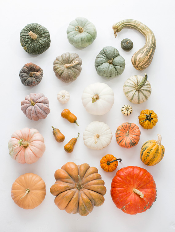 Guide to heirloom pumpkins on 100 Layer Cake | photo by Scott Clark Photo | 100 Layer Cakelet
